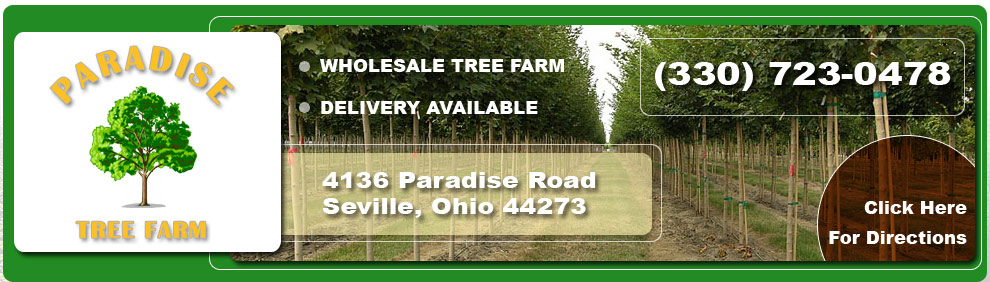 Paradise Tree Farm Ohio Tree Farms Wholesale Tree Farm Tree